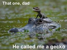 that would be it's mom, their mothers protect them while all the other gators in the area eat the young but anyways tooo funny!!