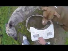 (12) Jack Hargreaves - The Lurcher - YouTube British Countryside, Lurcher, New Job, Youtube, Youtube Movies