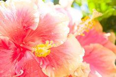Image via We Heart It https://weheartit.com/entry/129556575/via/24634130 #amapola #colors #flowers #pink #puertorico #summer #sun #sunshine #tumblr #yellow