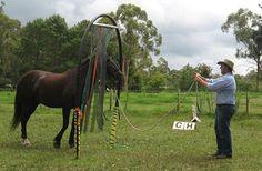 Horse Agility.. - KalEquine Services