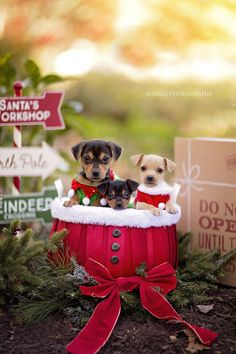 20 best dog christmas pictures images in 2017 Dog Christmas Pictures, Christmas Puppy, Noel Christmas, Christmas Animals, Christmas Humor, Mexico Christmas, Holiday Pictures, Puppy Pictures, Dog Photos