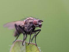 Fliege | Fly