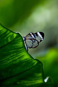 via 31 Inspirational Butterfly Portrait | Great Inspire)  ♥  :-)