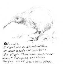 Drawing of a Kiwi bird - New Zealand