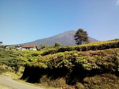 Home sweet home. blue sky, mountain, and tea garden. Sky Mountain, Vineyard, Sweet Home, Country Roads, Spaces, Tea, Garden, Blue, Outdoor