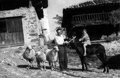 Conchita a lomos del burro, con las ovejas y Avelino, con el hórreo al fondo. vecino de Luerces, Pravia. Año 1970. LUERCES.COM. Cortesía: Memoria digital de Asturias. Gobierno del Principado de Asturias (España).