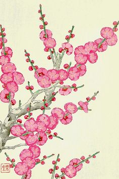 Japanese floral art, antique japanese irises flowers botanical art prints, posters, paintings and woodblock prints fine art reproductions. Red Plum from the series Floral Calendar of Japan by Shodo Kawarazaki (1889-1973). FINE ART PRINT, high quality fine art reproduction of the vintage japanese