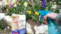 Avec le retour de la chaleur, les champignons peuvent proliférer dans le jardin et le potager. Surtout lorsque l'atmosphère est humide. Ces champignons, comme le mildiou, l'oïdium, la fusariose ...