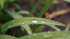 It's raining is to let it rain.  If you think it's going to rain, it will. Organic Mulch, Organic Gardening, Green Leaves, Plant Leaves, Going To Rain, Soil Improvement, Plant Based Nutrition, Green Lawn, Abstract Images
