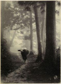 Suizan Kurokawa - Untitled, c. 1906.