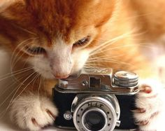 Curiosity is one of the things that makes cats so funny