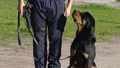 O Rottweiler que atacou uma criança em Matosinhos, em abril do ano passado, esteve em vias de ser abatido, mas foi reeducado e faz parte da equipa cinotécnica da PSP.