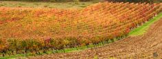 Couleurs d'automne en vallée du Lot https://photos.thierry-dollon.net?utm_content=buffer7ac2a&utm_medium=social&utm_source=pinterest.com&utm_campaign=buffer #followme #thierrydollon #photodujour #lot #sudouest #cahors #valleedulot