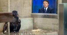 """Stampa rivela: """"Usate scimmie per testare il programma del PD"""""""