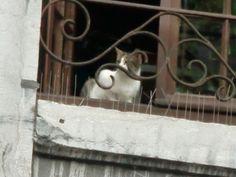 Gatto di Liegi...