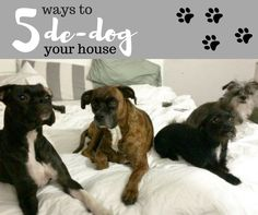 How to rid your house of that dog smell.