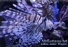 Abgetaucht - Leben unter Wasser - CALVENDO Kalender von Andreas Hebbel-Seeger - www.calvendo.de/galerie/abgetaucht-leben-unter-wasser/ - #unterwasser #underwater #fische #kalender