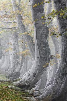 ''Fák és erdők'' kategória, 2. helyezett - Ködös erdő