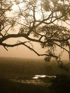 Mole National Park, Ghana.