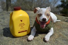 Dogs, cats and horses can benefit greatly from Forever Living products. Benefits including healthier coats, better digestive systems and more energy. You can even use the toothpaste! www.sylviamalfait.flp.com