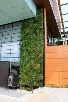 Green Walls can transform any space. Find out how your workspace can benefit from Green Wall installations.