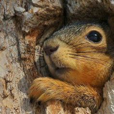 Is the hole smaller or did I get bigger? Nature Animals, Animals And Pets, Baby Animals, Funny Animals, Cute Animals, Woodland Creatures, Cute Creatures, Beautiful Creatures, Animals Beautiful