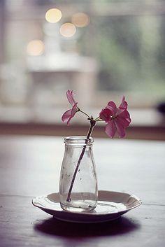 Flower friday, via Flickr. Geranium in glass milk bottle