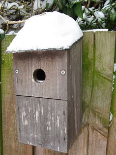 Bury nestbox has a hat on