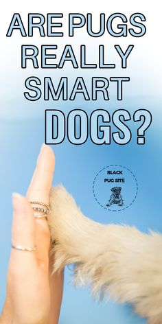 Are Pugs Smart Dogs? Plus 10 Of The Most Intelligent Breeds - Black Pug Site Pug Facts, Old Pug, Black Pug Puppies, Fawn Pug, Fawn Colour, Baby Pugs, Different Dogs, Dog Care Tips, Family Dogs