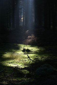 Winter sunshine in the Forest of Dean, Gloucestershire, Forest Of Dean, Blue Forest, Deep Forest, Forest Path, Beautiful World, Beautiful Places, Beautiful Pictures, Forest Floor, Walk In The Woods