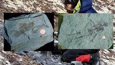 O fosilă de umanoid veche de 600 de milioane de ani a fost găsită în Antarctica | Vrajitoare Online Cel mai mare Portal de Vrajitoare din Romania