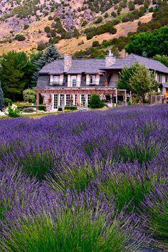 Lavender Apple Farm
