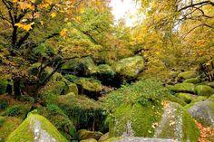 """Huelgoat Het bos van Huelgoat, ofwel het """"Bretonse Fontainebleau"""", is de wieg van veel Keltische legenden en is vooral bekend om haar rariteit en de schoonheid van de rotsen. Een stapel afgeronde, chaotisch geschikte blokken die als inspiratie diende voor veel verhalen. Ook slingert de rivier de Argent hier tussendoor, het gebied van de feeën van Huelgoat."""