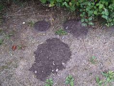Bekæmp muldvarpen med hvidløg