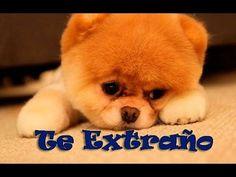 Amor mira este Vídeo ♡♥ Quiero decirte que.... ♡♥ - YouTube