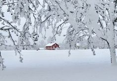 Talvea Ristiinassa
