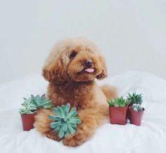 Puppy life photos