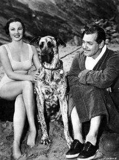 Gene Tierney, great dane, Clark Gable