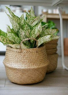 Versatile seagrass basket with handles. Pop a saucer in the bottom and place a plant inside or use it for storage. The unstructured nature of this basket makes it easy to fold down into a bowl shape for additional uses and easy storage.