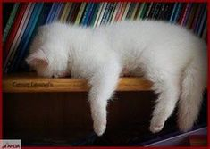 I can relate!  This is sooo how I feel today.