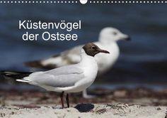 Küstenvögel der Ostsee - CALVENDO