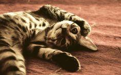 Funy Cat