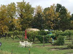 South Vineyard late summer 2018