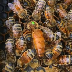 While a few of us may suspect something, we don't have the foggiest idea about that much about bees. Whenever asked, we would most likely portray a honey Honey Bee Farming, Types Of Bees, Sweeter Than Honey, Mason Bees, Mundo Animal, Bees Knees, Bee Keeping, Psalm 119, Beekeeping