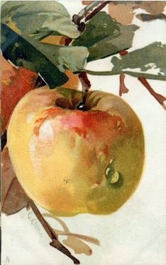 Large Apple by Catherine Klein ~ 1910 Watercolor Fruit, Fruit Painting, China Painting, Watercolour Painting, Watercolors, Catherine Klein, Pinturas Em Tom Pastel, Watercolor Pictures, Still Life Art