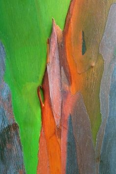 World's Most Beautiful Tree Bark more rainbow eucalyptus bark - up close. crazy that there are over 900 kinds of eucalyptus!more rainbow eucalyptus bark - up close. crazy that there are over 900 kinds of eucalyptus! Patterns In Nature, Textures Patterns, Organic Patterns, Macro Fotografie, Rainbow Eucalyptus Tree, Art Texture, In Natura, Tree Bark, Mother Nature