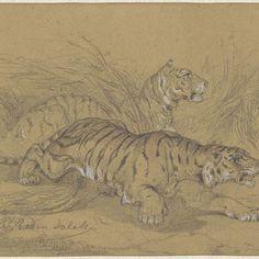 Twee tijgers sluipend door het gras, Raden Sarief Bastaman Saleh, 1824 - 1880 - Rijksmuseum