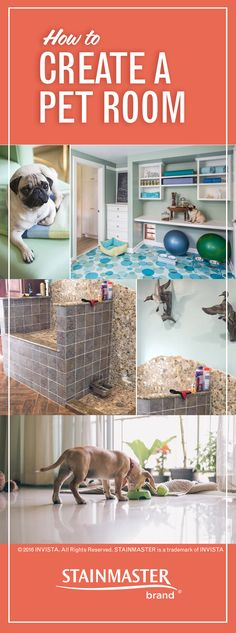 A pet room? Isn't that when you throw a bed and a bowl in a spare part of the house? Not anymore. These rooms are so cool you'll want one for yourself.