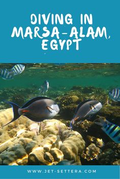 Scuba Diving the Red Sea in Egypt, at the Brayka Bay Resort of Marsa Alam with beautiful fishes, eagle rays, watching tanoura dancers in the evening.