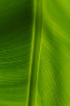 Leaf_07
